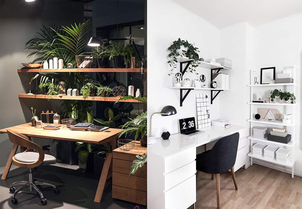Plants For Eco Office Home Office Ideas Eco